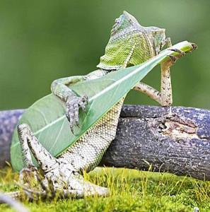 guitar-funny